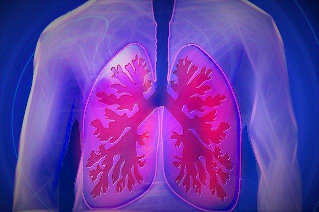 płuca człowieka