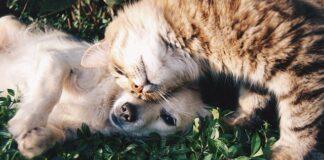 Czym objawia się alergia na psa?